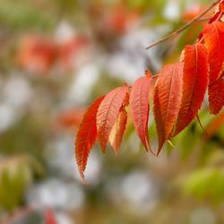 autumn moods