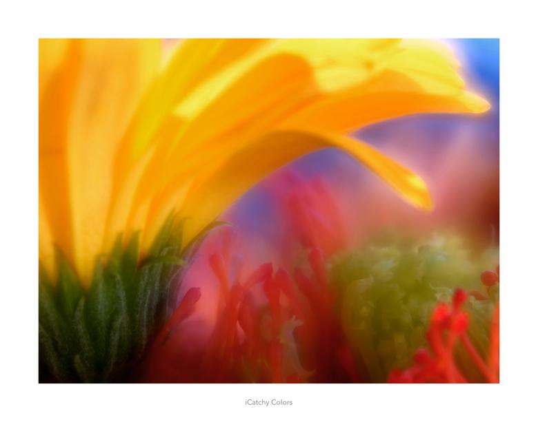 iCatchy Colors - Lensbaby Velvet 56mm. Alvast bedankt voor eventuele reacties. Mvg, Vincent