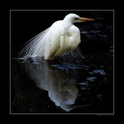 Reflected Elegance