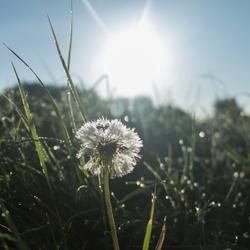 Goedemorgen zon