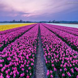 Lente in Nederland