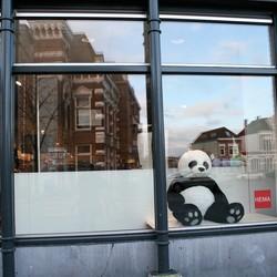 IMG_6934 Eenzame panda