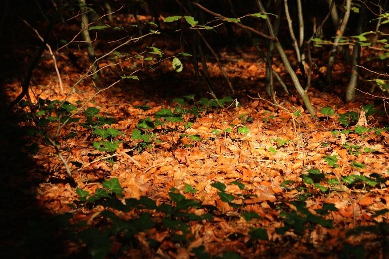 Fall-Forest-magic -