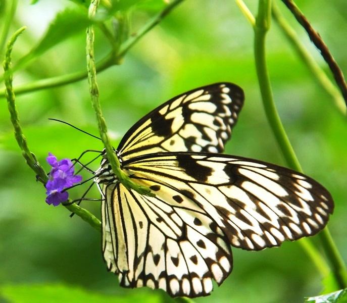 flora en fauna samen - één der schoonheden uit het vlinderhuis in artis