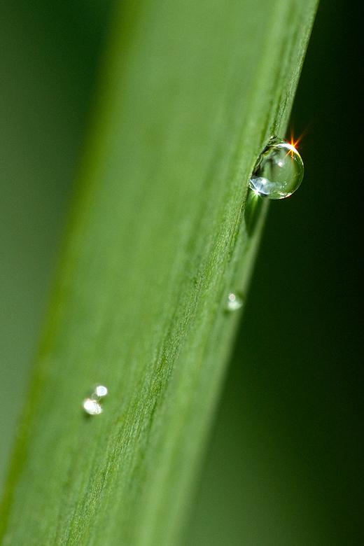 Waterdruppel - Reflectie van de zon in een druppel water op een plant (onbewerkt).