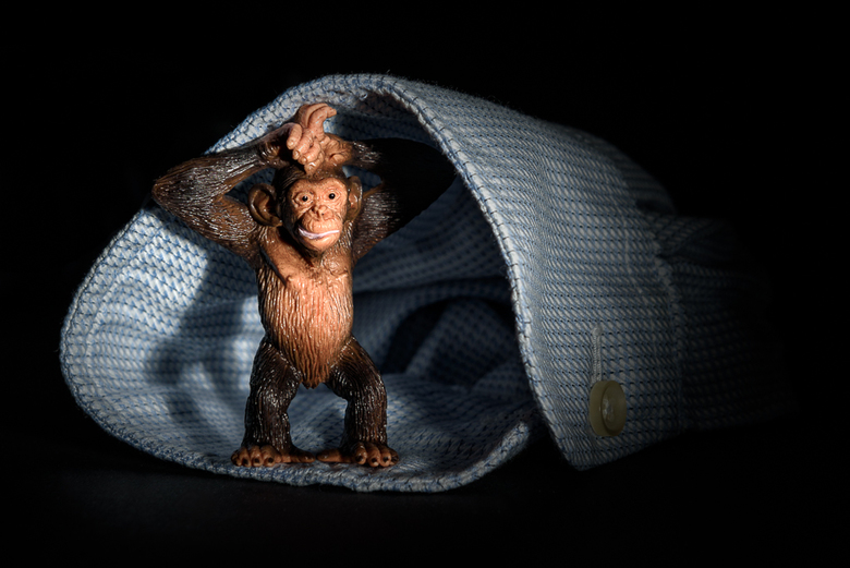 De aap komt uit de mouw