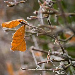 Winterse bladeren