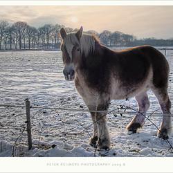 Paard in de kou