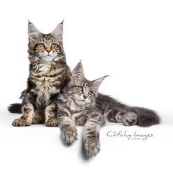Dreamy kittens