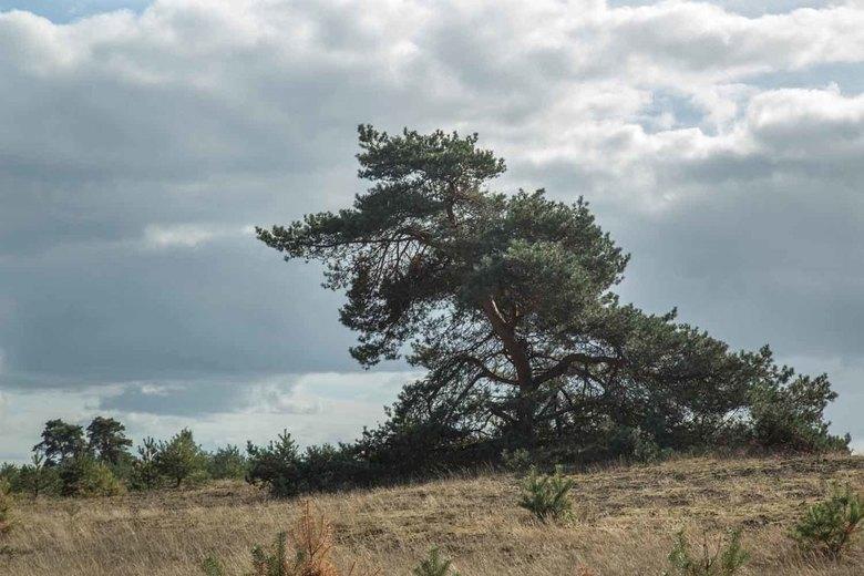 Omgeving Kootwijkerzand -