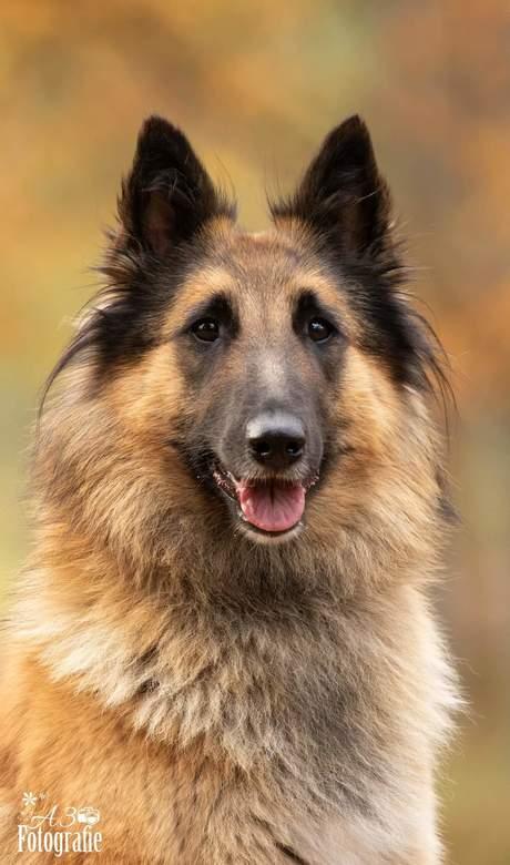 Tervuerense Herder - Onze jongste hond Juna...