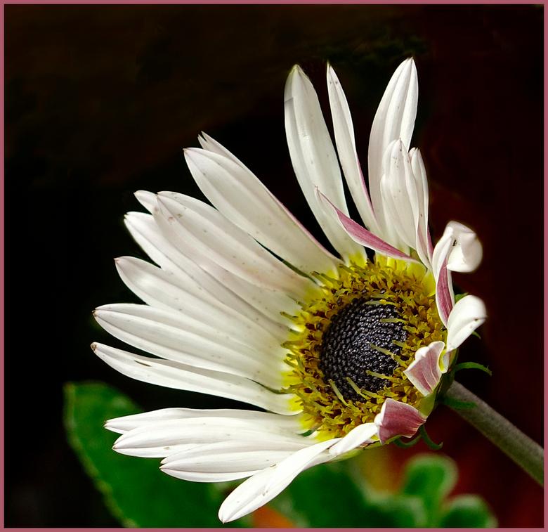 Bloem 3 - Nog maar een bloemetje uit Artis. Ik begin zo langzamerhand wel ontwenningsverschijnselen te krijgen. gr. Nel