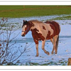 Zonnig paard  winter 8
