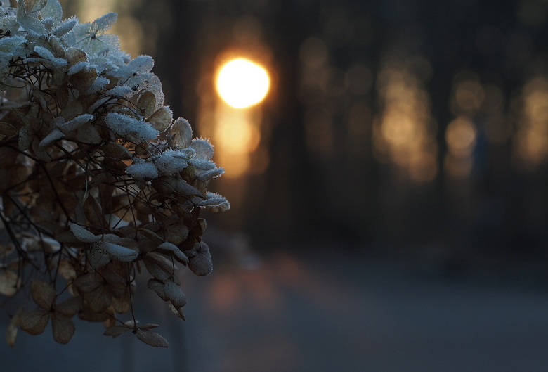 OCHTENDGLOREN... - Een koude start vanmorgen in het bos....Rijp en tintjes..<br /> Het zonnetje kwam op....gelukkig had ik even de camera mee .
