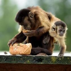 Sweet monkey !!!