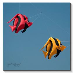 Fish in the skye