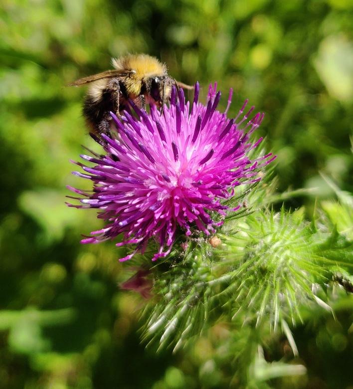 Wees zuinig op onze bijen