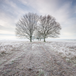 Winters landschap Dwingelderveld