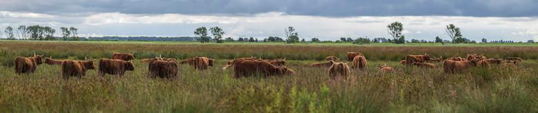 Highlanders  - Highlanders  (panorama 5 foto's) -- Tiengemeten (NL)
