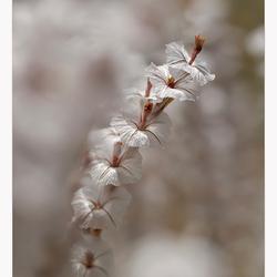Wilde bloem