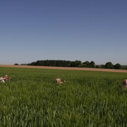 rennen in het veld van de boer