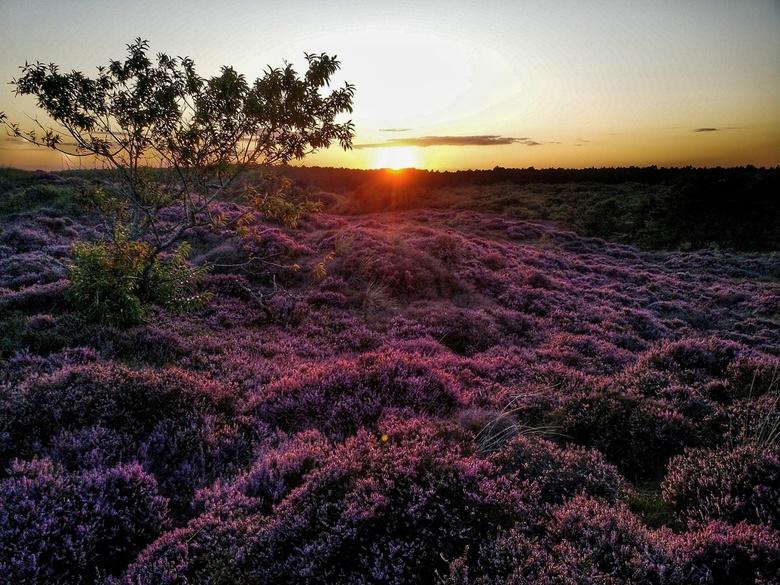 Purple Sunset at Bergen -