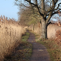 Rond Ankeveen.