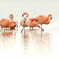 Flamingo's aan het Veluwemeer