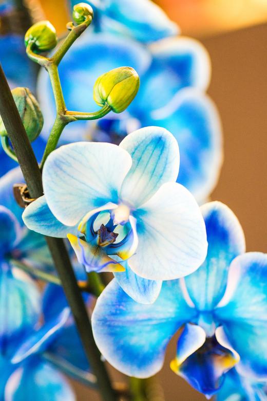orchideeenhoeve -