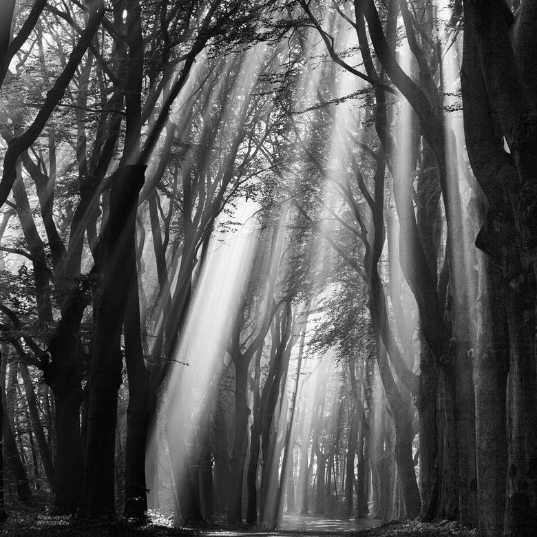 Rays of light 4 - Een magische ochtend