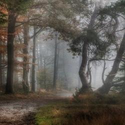 Vroege ochtend in het nevelige bos.