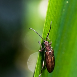 Gold beetle into the light