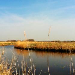 Natuurgebied Grutte Wielen, Friesland, Iphoneography