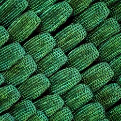 55x vergroting van de Schubben van een Groene Vlinder