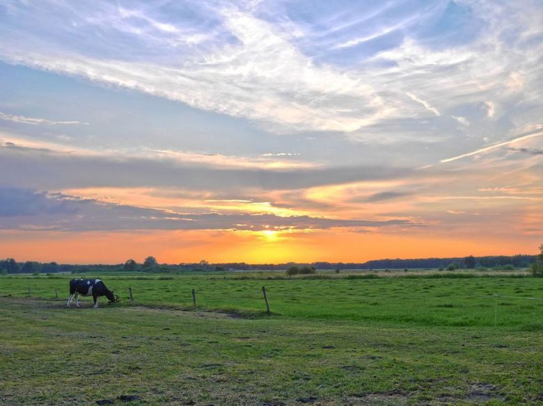 Zon over het weiland - HDR van 7 foto's van een zonsondergang over het weiland, inclusief koe