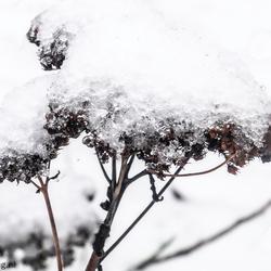 Met sneeuwlaagje bedekt