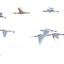 Lepelaars-vliegen-over