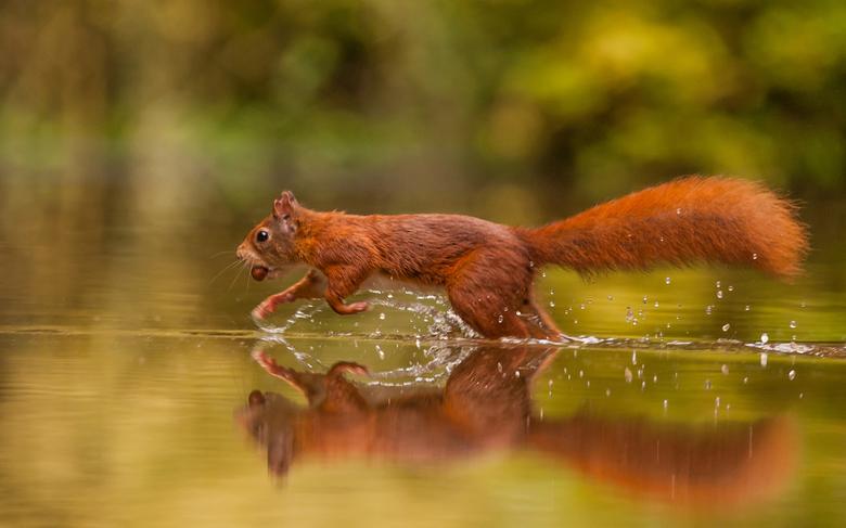 Eekhoorn - Hongerige eekhoorn