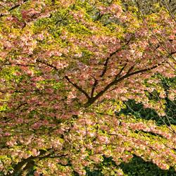 Arboretum-bloesempracht