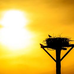 Zonsondergang met silhouette