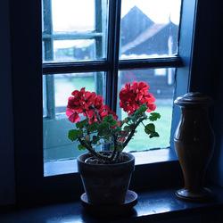 achter de geraniums .....