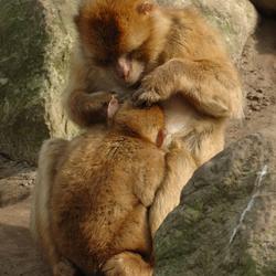 Moeder en kind Berber