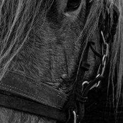Close up paard