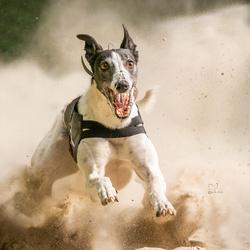 Happy Greyhound...