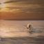 Golden retriever during the golden hour
