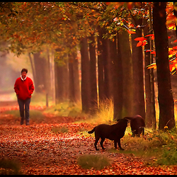 Walking with the dogs