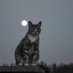 Ripley in het maanlicht