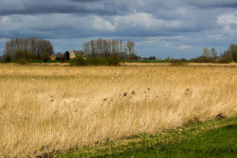Korenveld - Groot contrast tussen een korenveld in de zon en de donkere lucht erboven.<br /> <br /> Mario