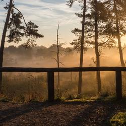 Mist in het Mastbos