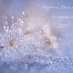 Happiness, Peace and Joy to everyone in 2017!